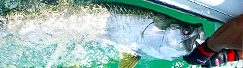 Tampa Bay Tarpon Fishing