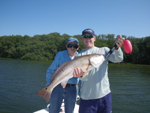 AJ landed this 32 in. Redfish while fishing on my charter in St. Petersbug