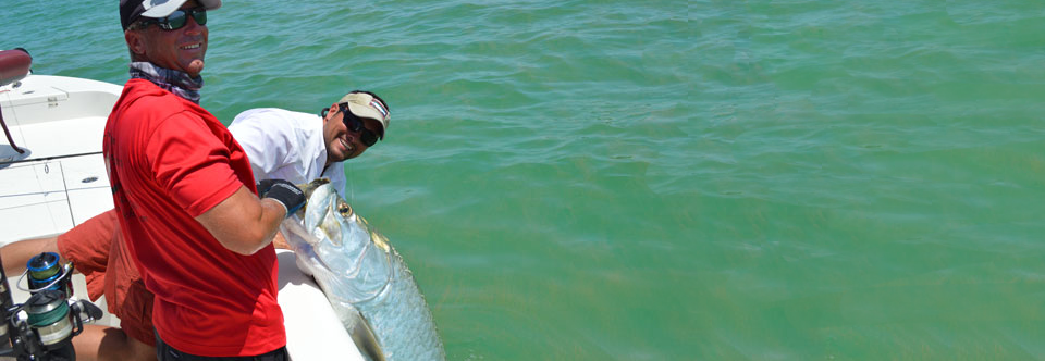 Tarpon are everywhere